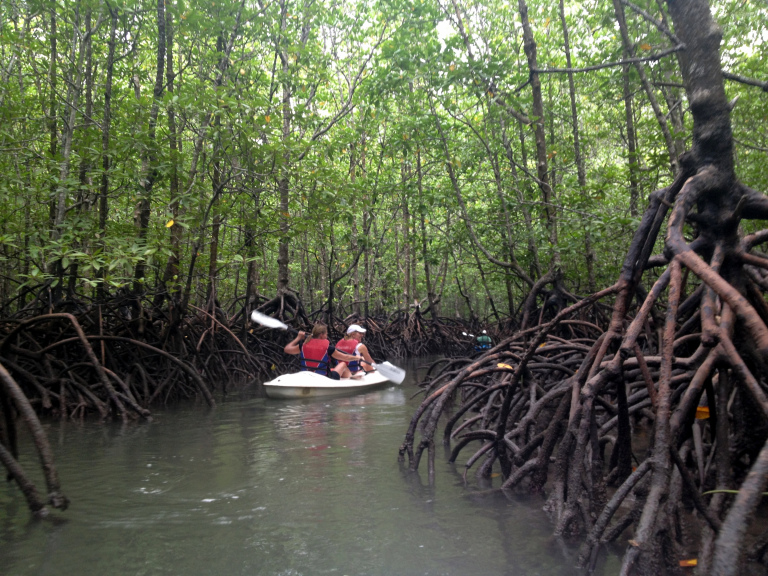 If you're feeling extra adventurous, you can even kayak your way through the mangrove!