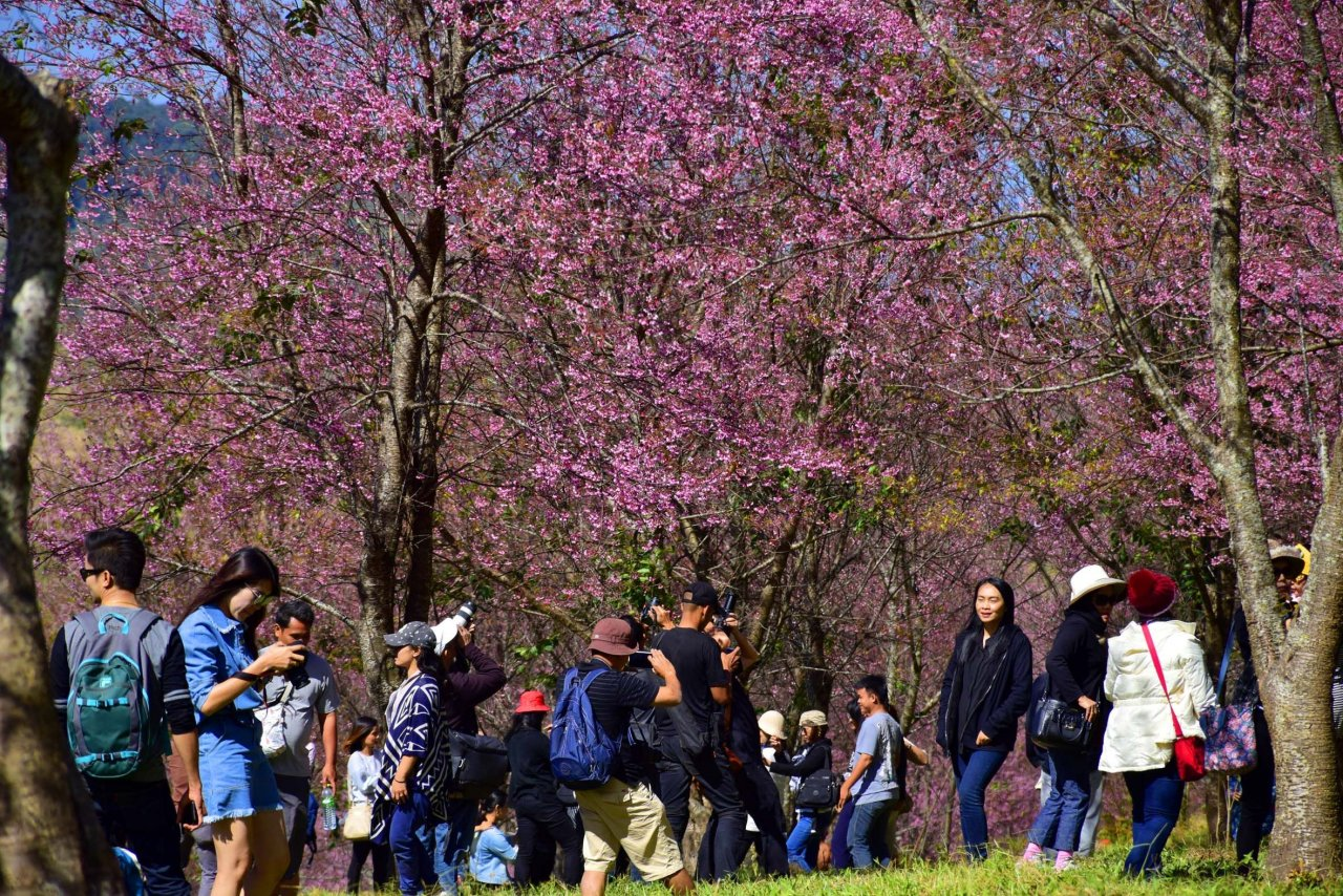 This place is swarmed by tourists come the cherry blossom season.