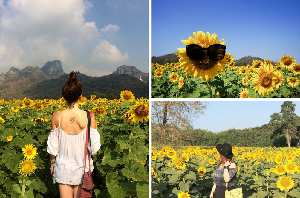 5 Instagram-Worthy Sunflower Fields You Should Visit Across Asia