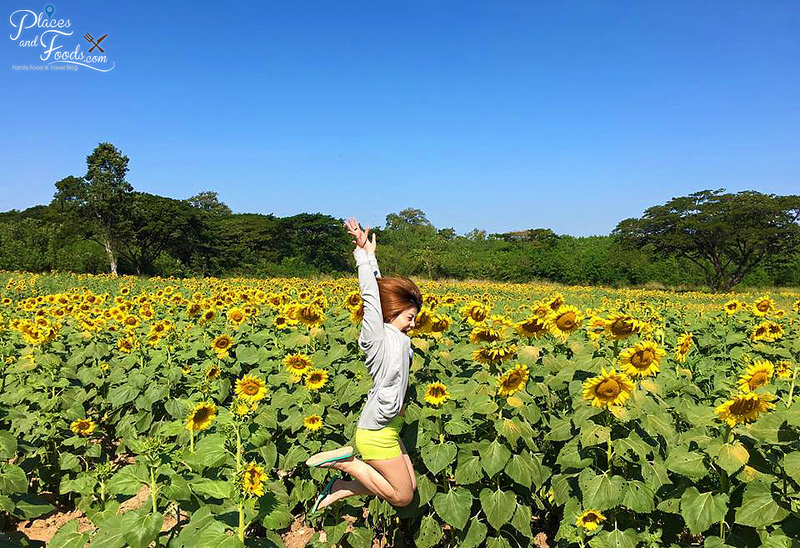 Who wouldn't jump for joy at the sight of sunflowers?