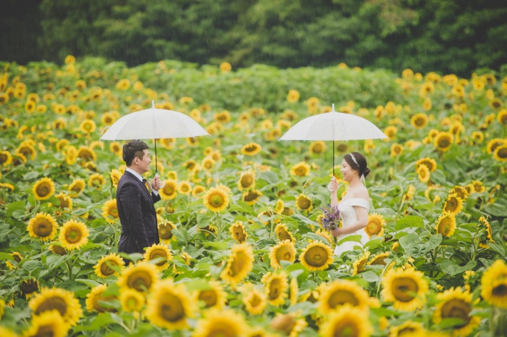 Too cute to handle! Wedding photoshoot at Jeju Island's sunflower field.