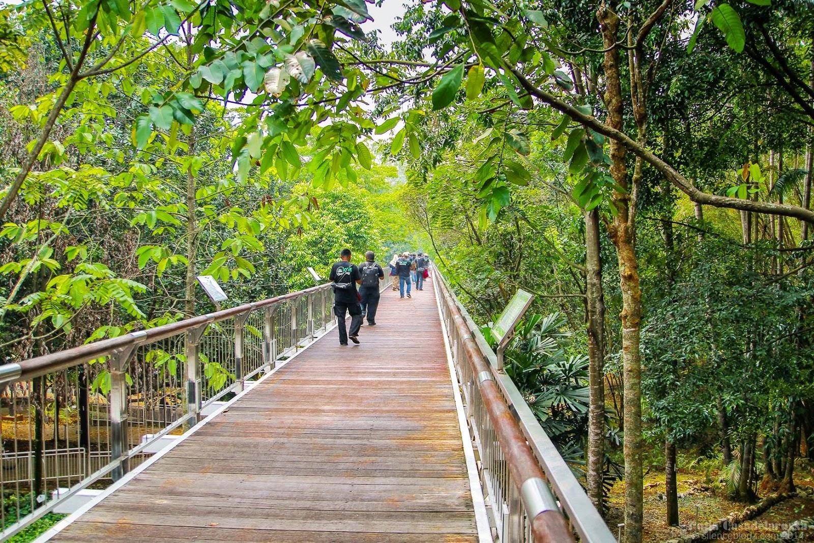 A pathway at Putrajaya Botanical Gardens.