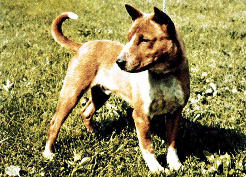 Such a handsome doggo!