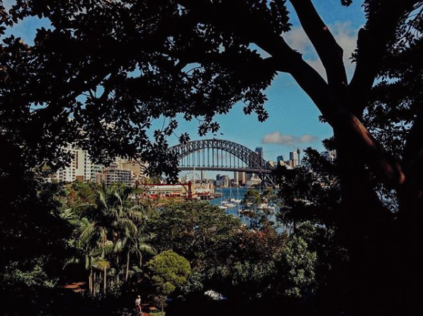 The Sydney Harbour Bridge peeking through the trees.