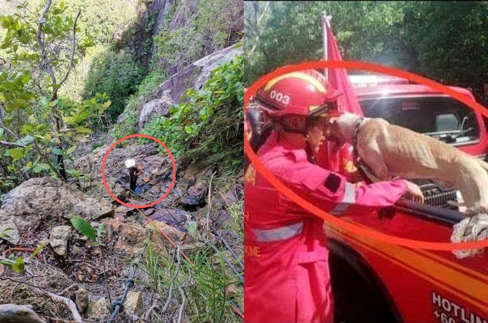 Dog Falls Into 100ft Ravine In Penang, Abang Bomba Comes To The Rescue