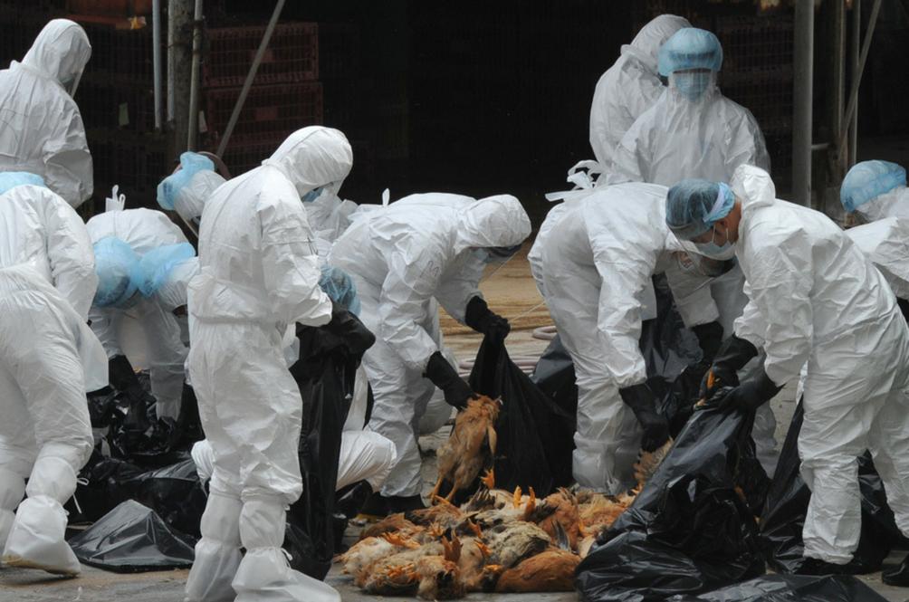 South Korea Issues Maximum Alert on H5N6 Virus Outbreak