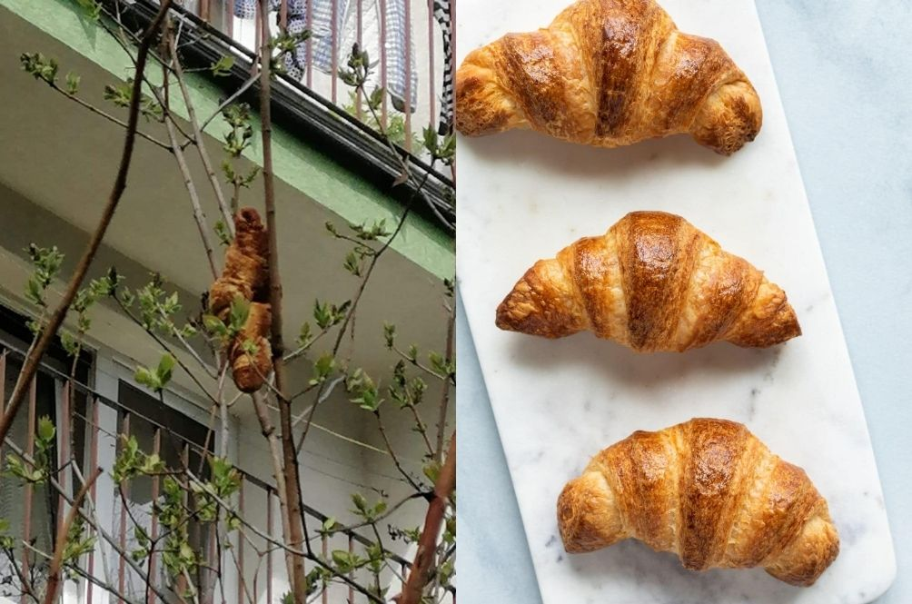 Unidentified Beast 'Terrorising' Residents Turns Out To Be A Croissant Stuck On A Tree