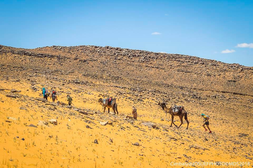 The marathon participants will also get a glimpse of camels along the way!