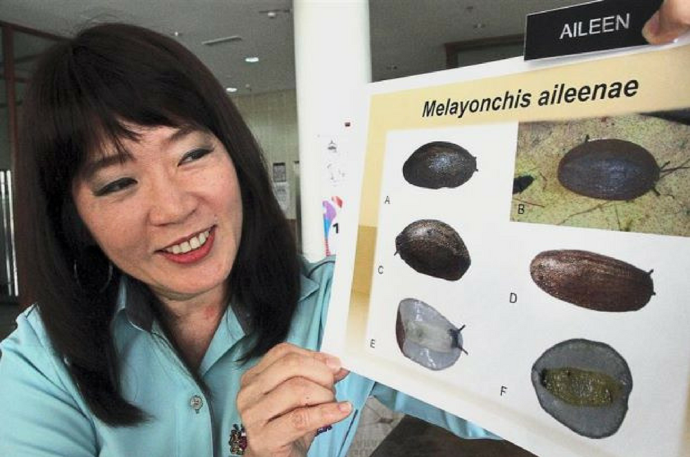 A New Slug Species Was Named After This Awesome Malaysian Marine Biologist