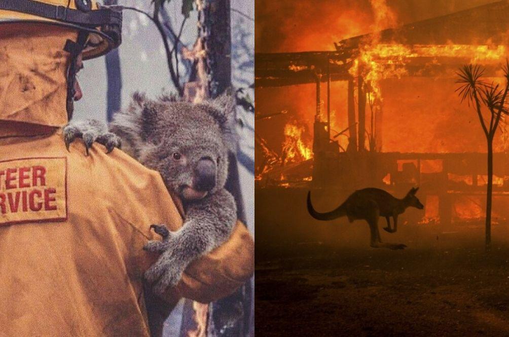 Koalas, Kangaroos, And Almost HALF A BILLION Animals Killed In Australia's Raging Wildfire