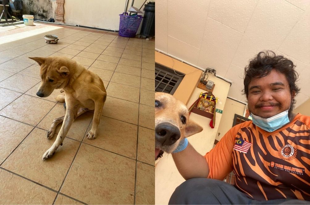 Muslim Man Takes Care Of Neighbour's Blind Dog After They Abandoned It