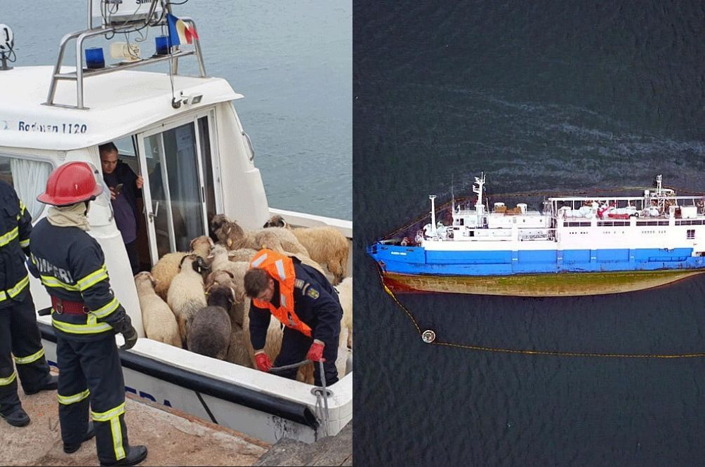 Over 14,000 Sheep Die After The Cargo Ship They Were On Capsized