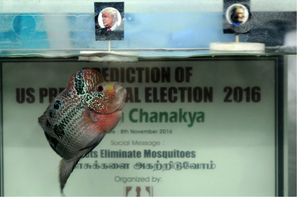 'Psychic' Fish is the Next Sensation to Try Its Luck at Predicting the US' Presidency