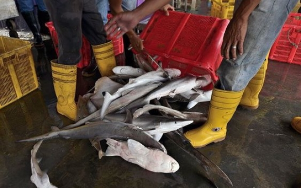 We need to stop supporting the shark fin industry.
