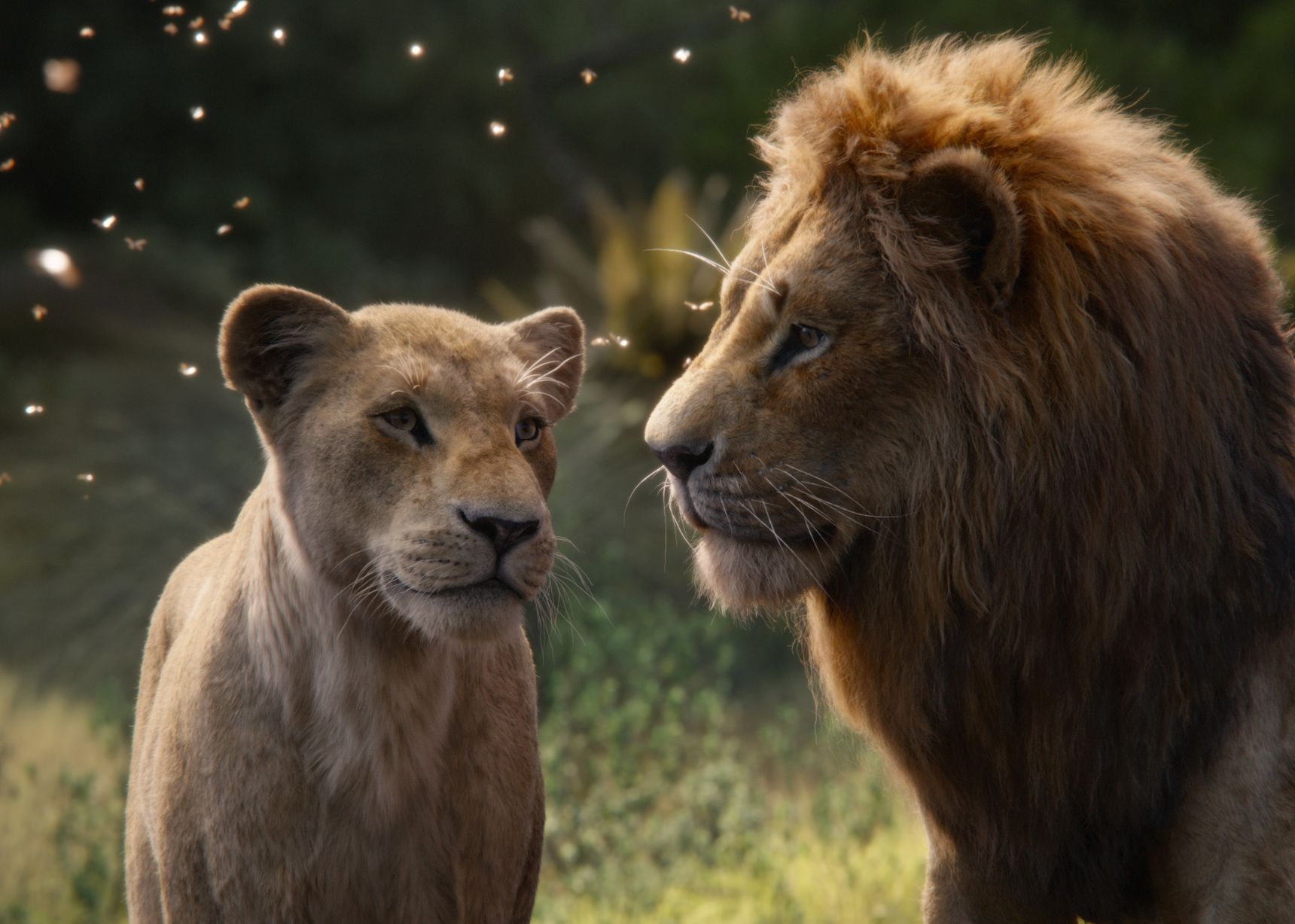 The love story between Nala and Simba.