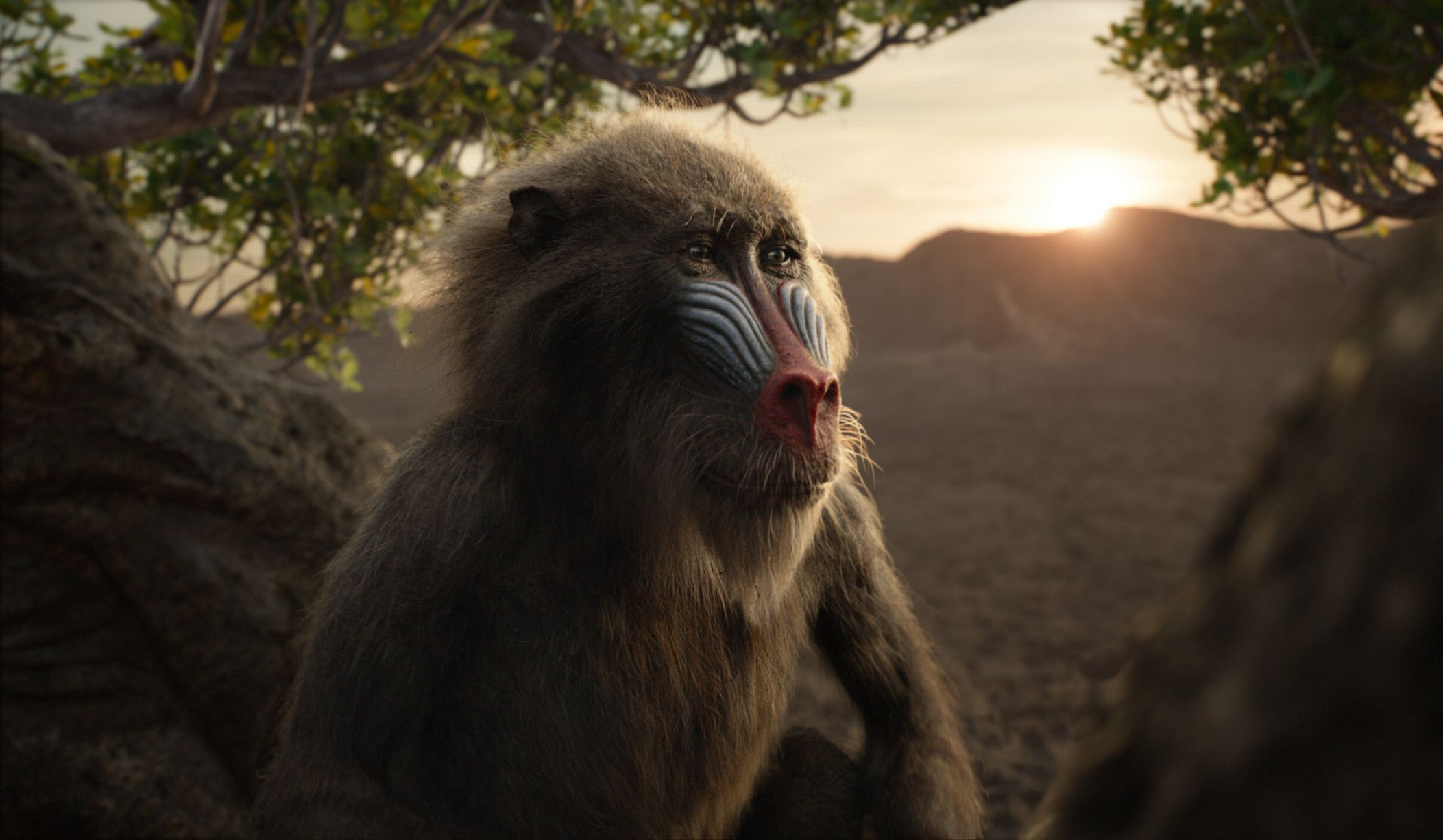 Rafiki looks almost exactly the same.