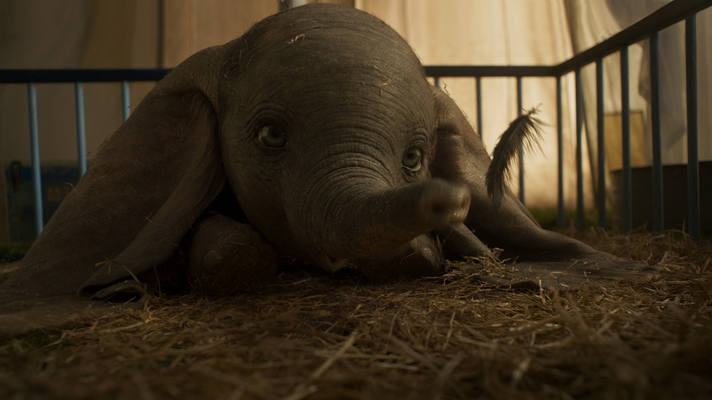 Can we take this Dumbo home?