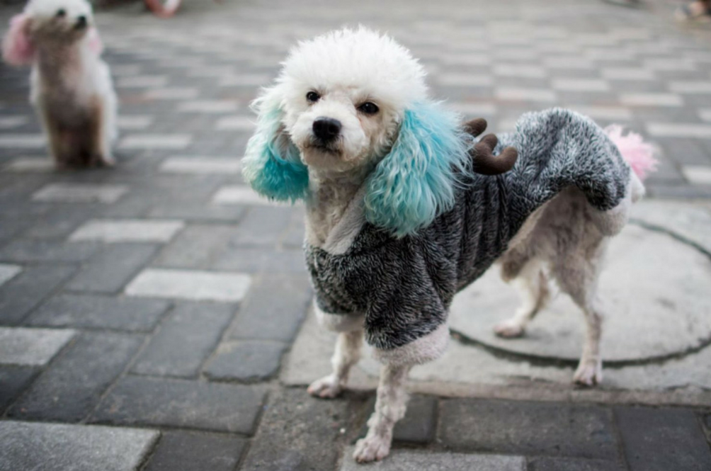 The Streets Of Shanghai Have Turned Into Fashion Runways For These Stylish Dogs