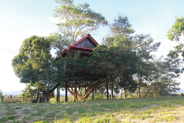 The modern tree house. Wonder if it is air conditioned?