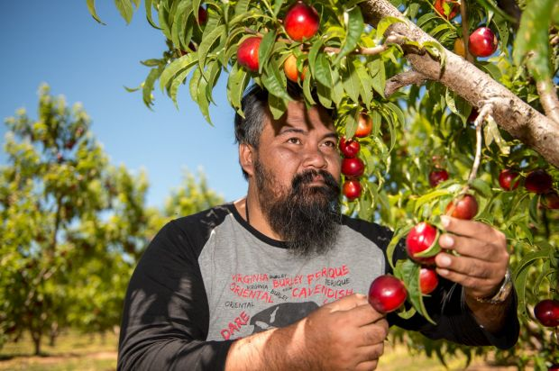 Last year, Saiful Haizan Hasam helped Fairfax Media expose the fruit picking industry.