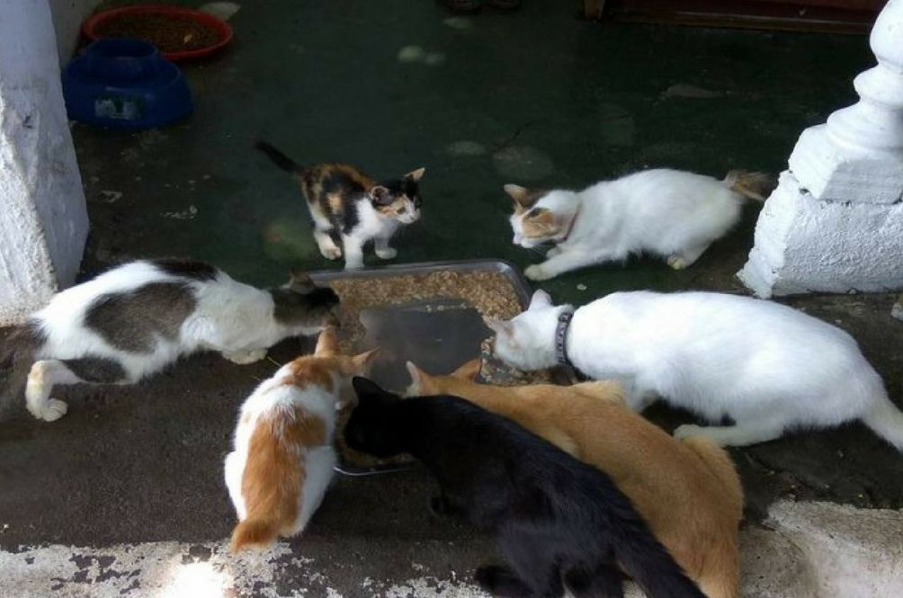 There Is A Rising Number Of Animal Abuse Cases In Malaysia
