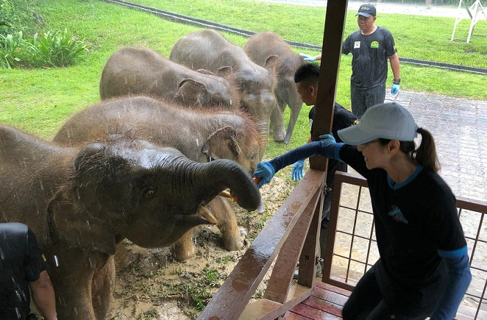 Michelle Yeoh recently spent some quality time with orphaned young elephants rescued in Sabah.