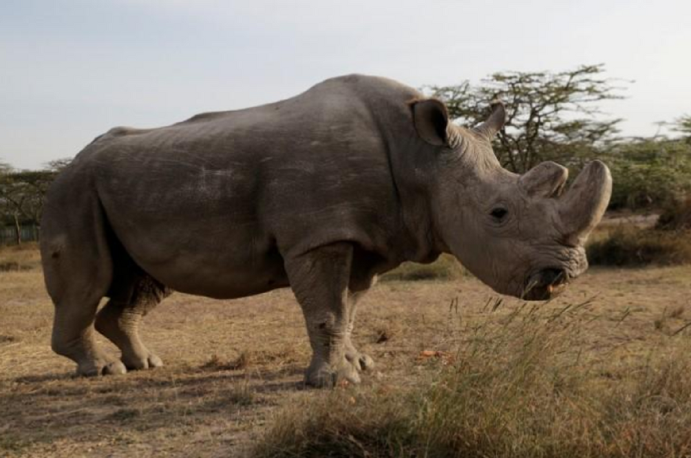 The World's Last Male Northern White Rhino Has Died