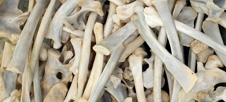 Malaysia should stop receiving lion bones exports.