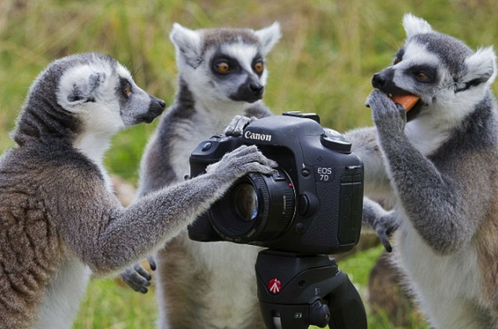 Stare at Cute Animals All Day With These Live Stream Animal Cams