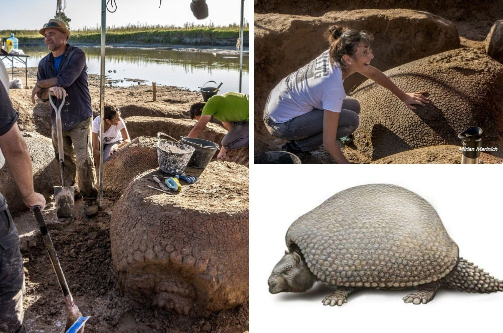 Car-Sized Armadillo Fossils Discovered Near Dried Up Riverbed In Argentina