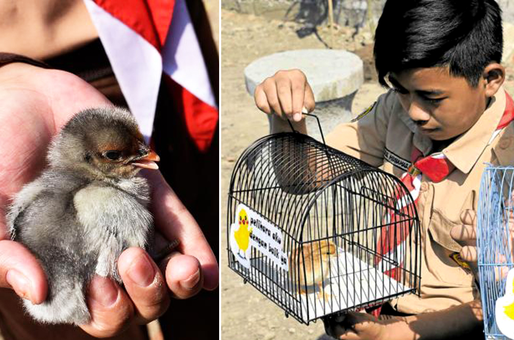 Indonesian Students Given Chicks To Distract Them From Their Smartphones