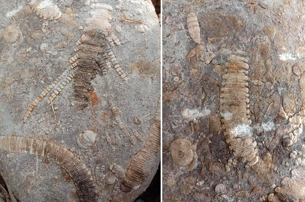 Woman Unexpectedly Finds Three 250 Million-Year-Old Fossils At Family's Plantation
