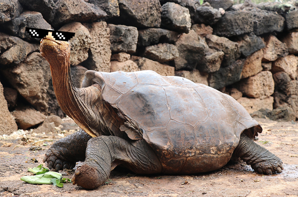 Diego The Giant Tortoise Single-Handedly Saved His Species By Fathering 800 Babies!