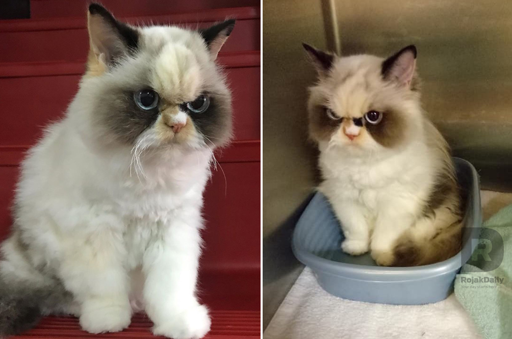 There's A New Grumpy Cat, And She Looks Grumpier Than The OG Grumpy Cat