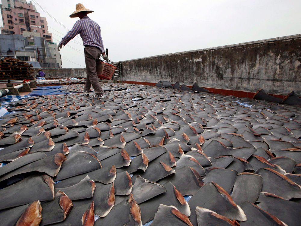 Please, say no to shark fins.