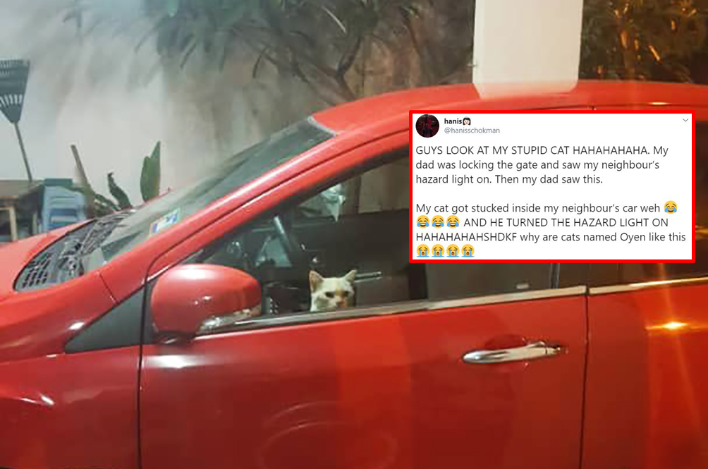 Presumably Trapped In Neighbour's Car, Cat Turns On Hazard Lights To Call For Help