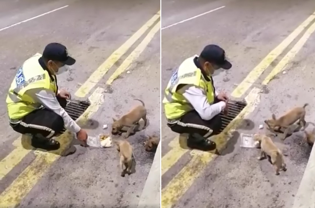 Kind-Hearted Abang Polis Goes Out Of His Way To Feed Stray Puppies