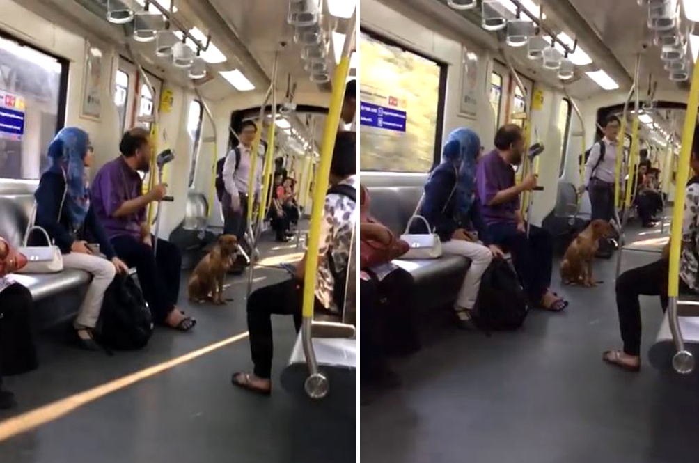 Stray Doggo Spotted Boarding LRT Coach And Sitting Quietly Throughout The Journey