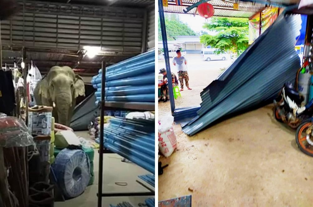 Durian-Obsessed Elephant Storms Into Shop In Thailand To Satisfy Craving