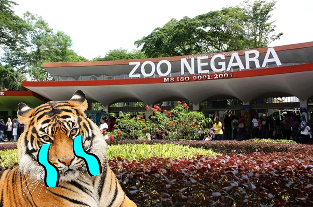 Zoo Negara Reportedly Does Not Have Money For Upgrading Works