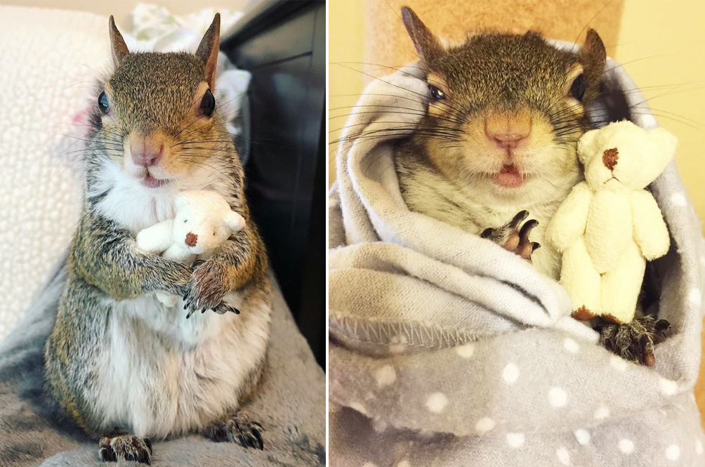 Meet Jill, The Squirrel Who Can't Go To Sleep Without Her Little Teddy Bear