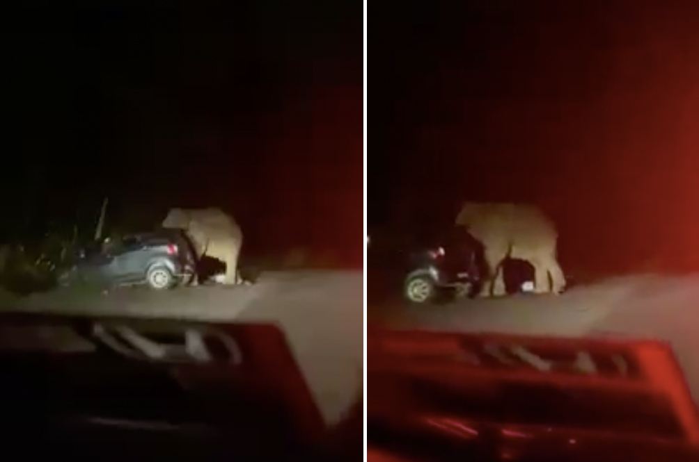 A Group Of Malaysians Narrowly Escapes When An Angry Elephant Stomps On Their Car