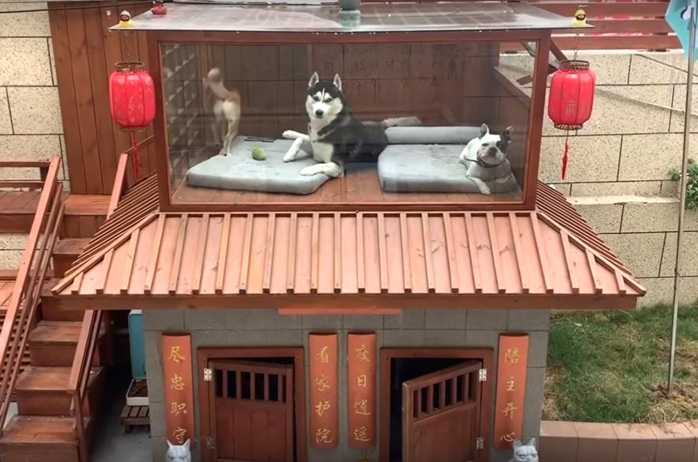 Man Builds Luxury Villa Complete With Spa And Pool For His Pet Doggos