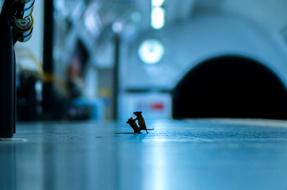 This Photo Of Two Mice Fighting In A Subway Just Won A Photography Contest