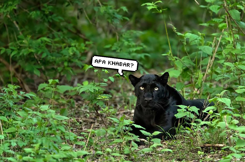 The Animals Are Back: Panther Spotted Prowling Around In Terengganu
