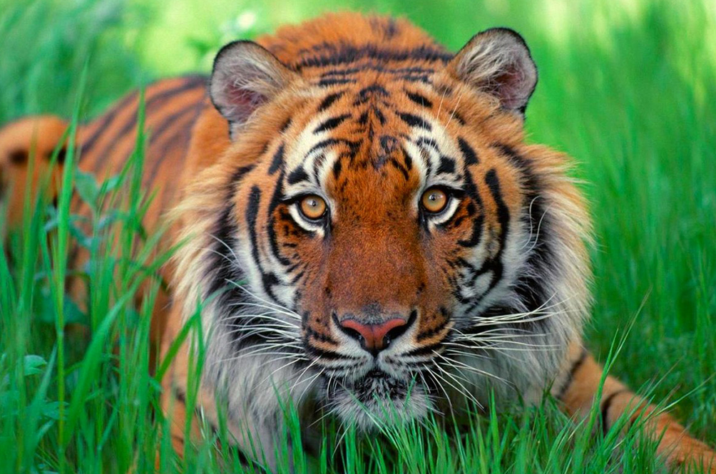 Critically Endangered: 3 Other Animal Species In Malaysia That Are Facing Extinction