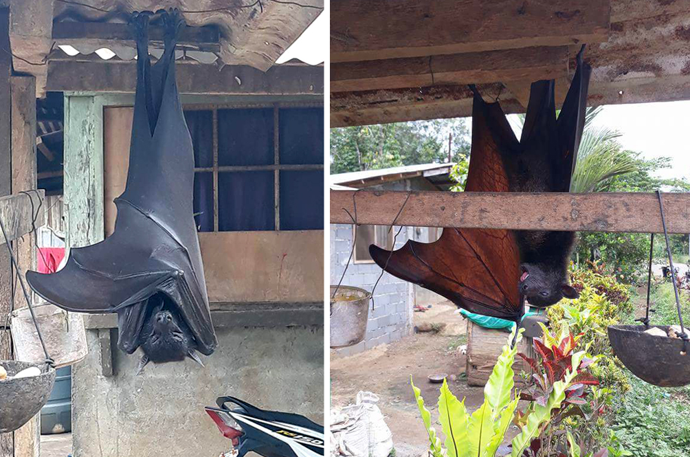 Child-Sized Bats Exist In The Philippines, Proving That Yes, Nature Is Scary AF