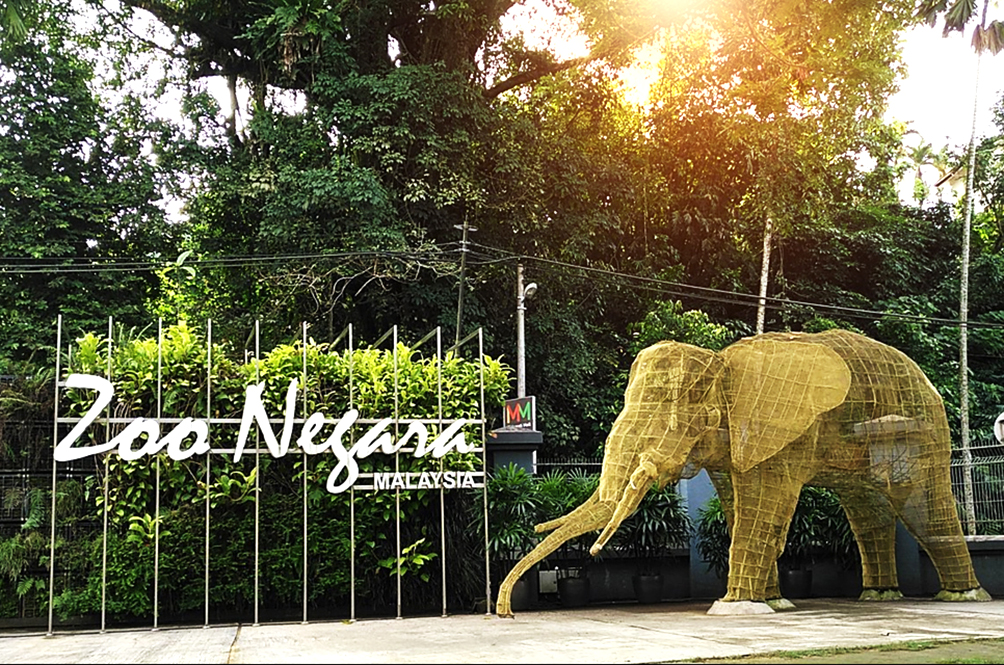 MACC To Investigate Zoo Negara's Financial Woes
