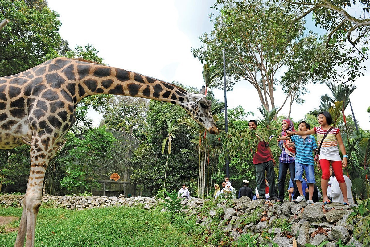 Now's the time to visit Zoo Melaka.