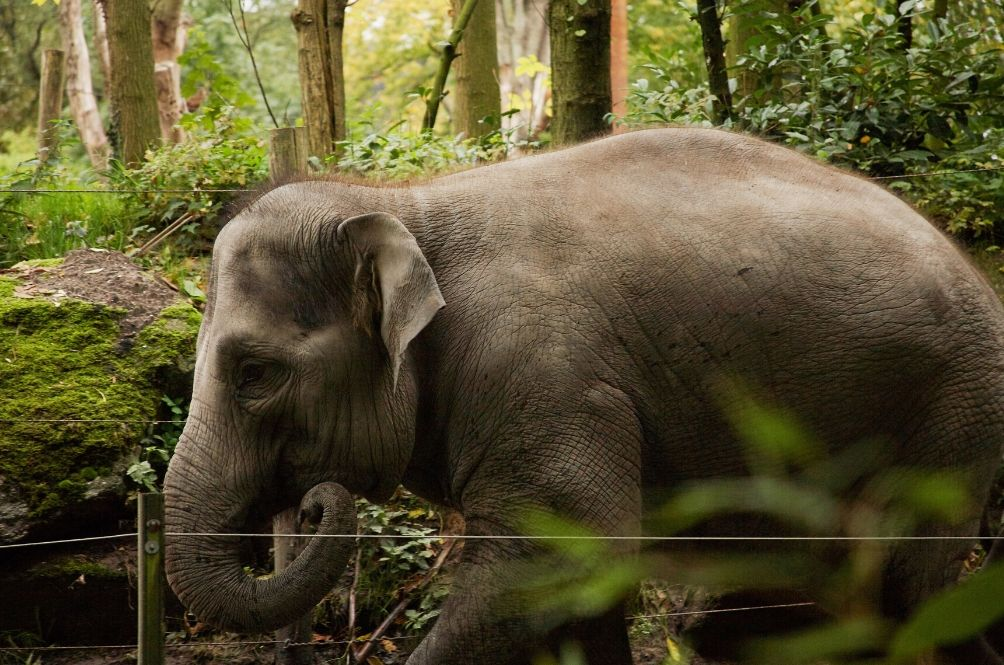 Malaysia Developing World's First Publicly Available Human-Elephant Conflict Resolution Mechanism
